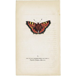 蝶々・バタフライプリントNo.3(Britain)