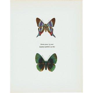 蝶々・バタフライヴィンテージプリント(45)