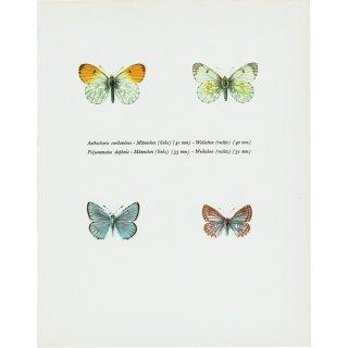 蝶々・バタフライヴィンテージプリント (4匹)