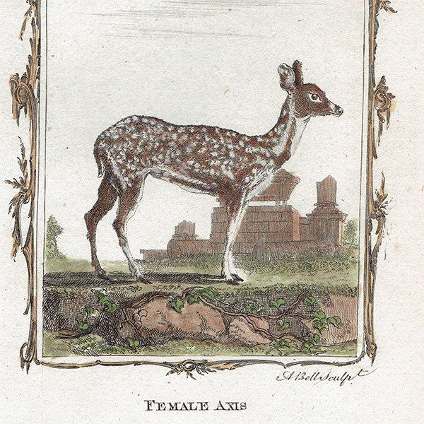 イギリスアンティークプリント  鹿(deer)・動物図鑑・博物画 0058