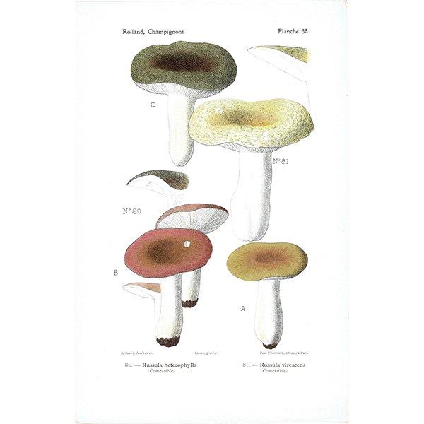 フランス キノコアンティークプリント ボタニカル植物画0086