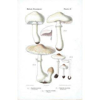 フランス キノコアンティークプリント ボタニカル植物画0087