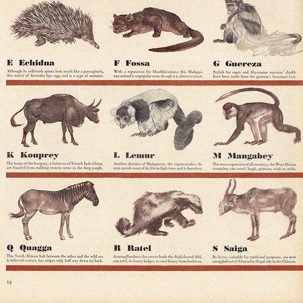 アメリカのヴィンテージ雑誌より〜アルファベットで学ぶ珍動物〜  012