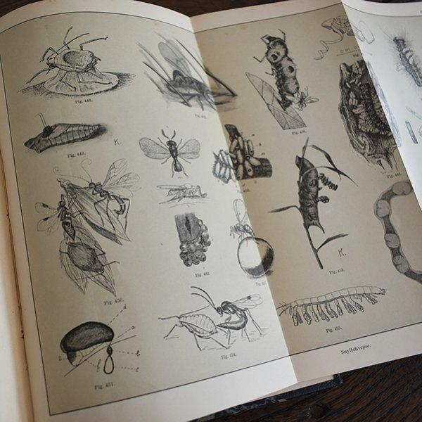 デンマーク 北欧 アンティークブック 古い洋書 昆虫学020