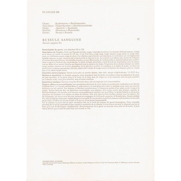 フランス ヴィンテージキノコプリント(ヤブレベニタケ|Russula rosea) 植物画0110