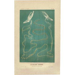 フランスアンティークプリント 海洋生物画|LE MONDE DE LA MER(海の世界) 0001