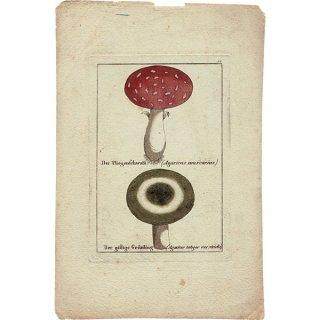 ドイツ アンティークキノコプリント 薬用 植物画0111