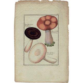ドイツ アンティークキノコプリント 薬用 植物画0113