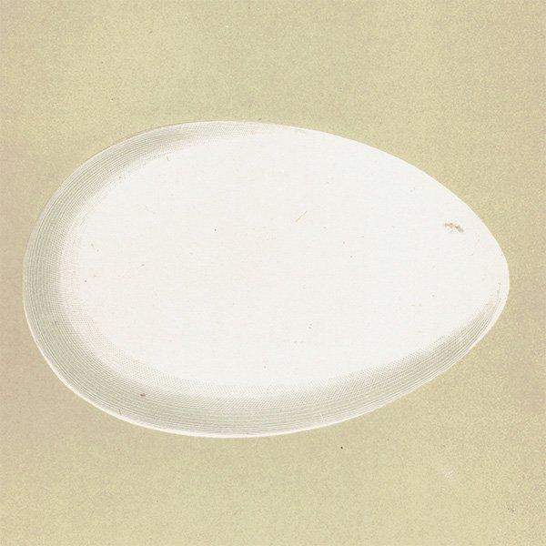 バードエッグ アンティークプリント ガチョウの卵 0011