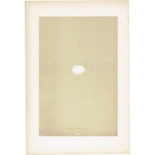 バードエッグ アンティークプリント ツバメ(MARTIN)の卵 0015
