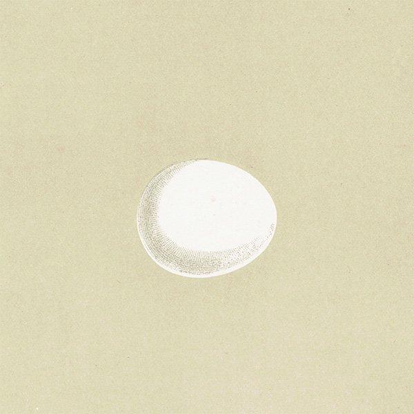 バードエッグ アンティークプリント フクロウ・ミミズク(OWL)の卵 0016