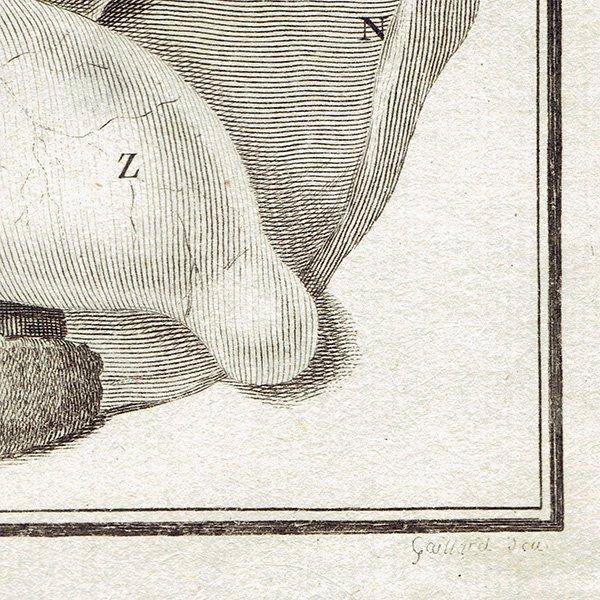 犬の解剖学 フランスの博物学者Buffon アンティークプリント  0060<img class='new_mark_img2' src='https://img.shop-pro.jp/img/new/icons5.gif' style='border:none;display:inline;margin:0px;padding:0px;width:auto;' />