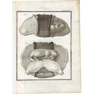 犬の解剖学 フランスの博物学者Buffon アンティークプリント  0060