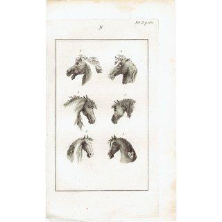 馬・ホース 観相学 アンティークプリント ラヴァーター(Johann Caspar Lavater) 1804年 0078