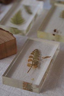 植物のアクリル標本-botancal specimen