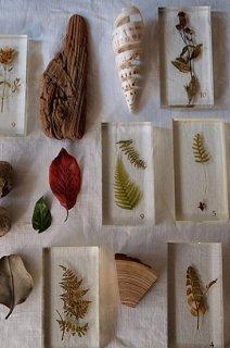 樹木と種のアクリル標本セット-botancal specimen