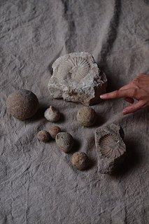 留まる化石-fossil objet