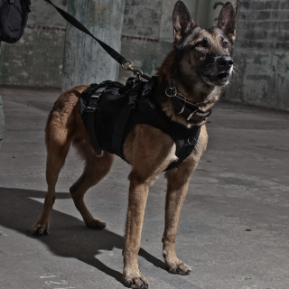 【お取寄せ】LBT_Tactical K9 Harness