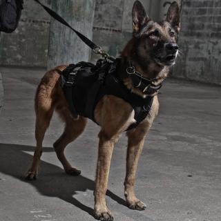 【お取寄せ】LBT_Tactical K9 Harness