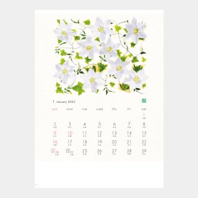 NC-7  花グラフィック(川崎景太作品集)