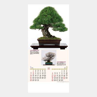 ND-115(AC-13・MS-451・MW-62・NC-14・NF-207・SD-22・YG-24・YK-624)  銘樹 (盆栽)