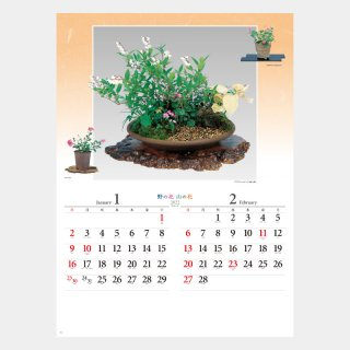 <img class='new_mark_img1' src='//img.shop-pro.jp/img/new/icons51.gif' style='border:none;display:inline;margin:0px;padding:0px;width:auto;' />NK-46  野の花・山の花(山野草盆栽集)