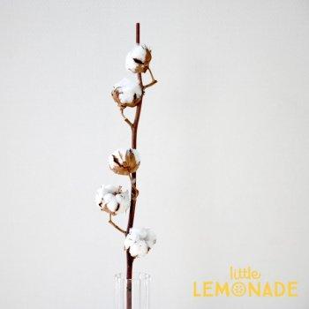 【コットンフラワー】 枝付 綿の木 ドライフラワー 綿花 ワタの木  onoen (50040-000)