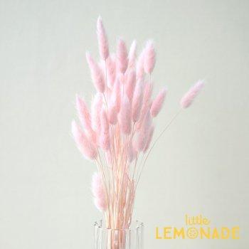 【ラグラス ピンク】 ドライフラワー   onoen (42050-101)
