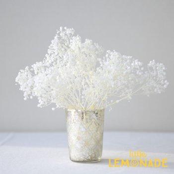 【かすみ草】 ホワイト プリザーブドフラワー   onoen(00030-011)