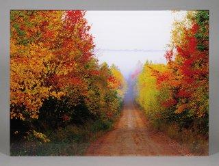 秋の赤い道(0459)
