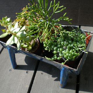 プランター 寄せ植え用 リサイクル雑貨 : ドラム アイアン