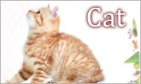 Cat / ネコ雑貨&アクセサリーArt