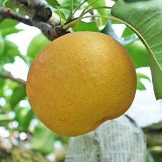 成生梨-豊水6-7個入り(3kg)