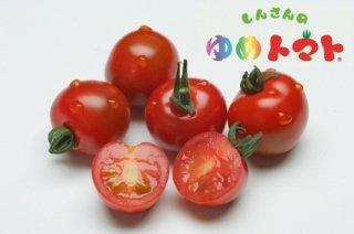 しんさんのゆめトマト(ミニトマト)