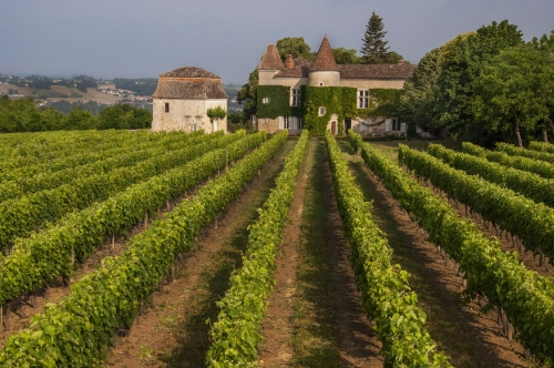chateau du frandat vineyard