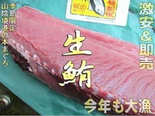 生黒マグロ、背1枚 5〜10kg