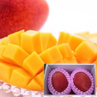 【受付終了】台湾アップルマンゴー 1kg(特選大玉2個入り)6月下旬〜7月下旬頃お届け