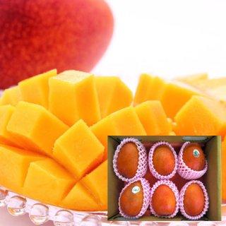 【受付終了】台湾アップルマンゴー 2.5kg(5〜7個入り)6月下旬〜7月下旬頃お届け