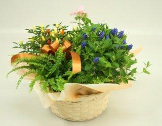 季節の花とグリーンの寄鉢