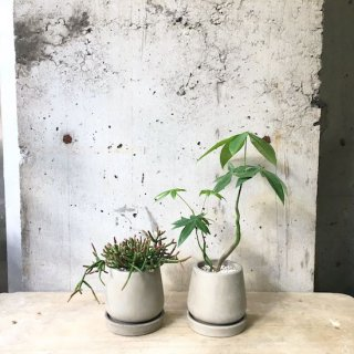 観葉植物小鉢セット(リプサリス・パキラ)