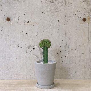 urb pot-TYPE02-S ユーフォルビア ホーウッディ 綴化接木