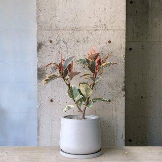 フィカス ティネケ urb pot TYPE01-M