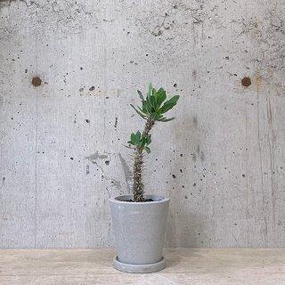 ユーフォルビア ディティエロイデス urb pot-TYPE02-S