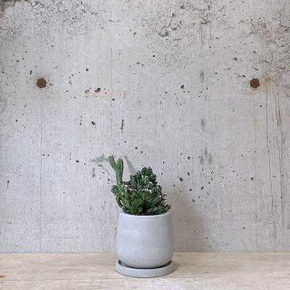 サボテン 残雪の峰 urb pot-TYPE01-S