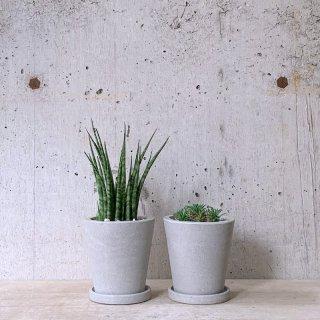 観葉植物小鉢セット(サンスベリアファーンウッド・ユーフォルビアパイナップルコーン)urb pot TYPE02-S