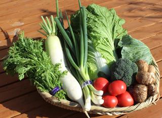 旬の野菜セット(M)
