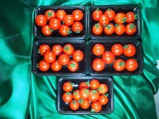 匠のフルーツトマト (5P)