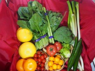 旬の野菜・果物セット(LL)