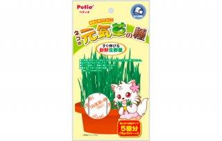 ネコの元気草の種 15g×5包入
