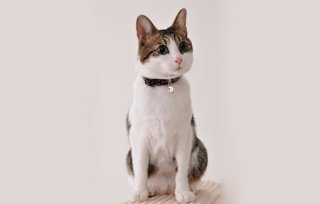ドットレザーカラー/CAT COLLAR